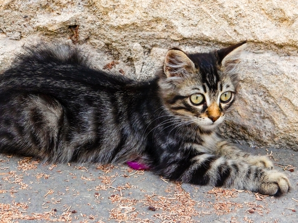 Cats Cyprus585